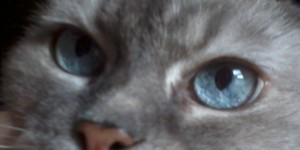 This is a picture of Prinnie's blue eyes.
