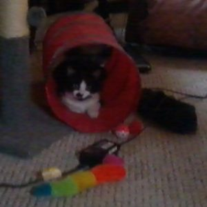 Midge in her tunnel enjoying the unplugged life with me