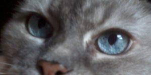 Prinnie's blue eyes