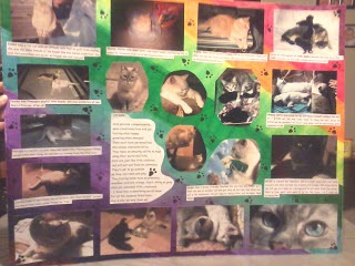 The final product of my completed cat collage